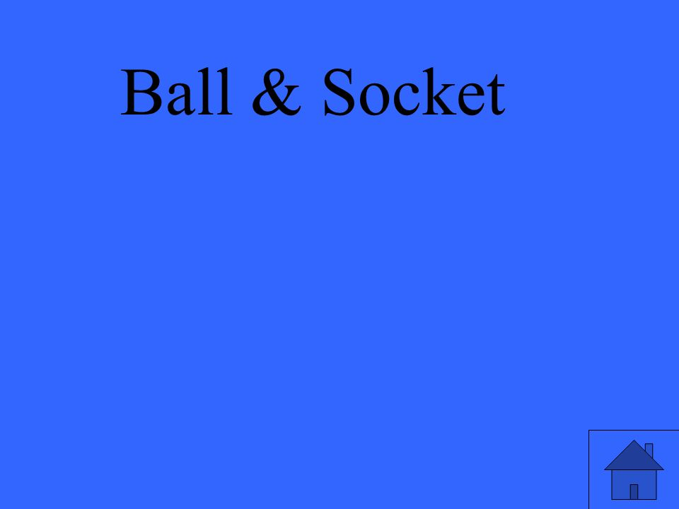 Ball & Socket