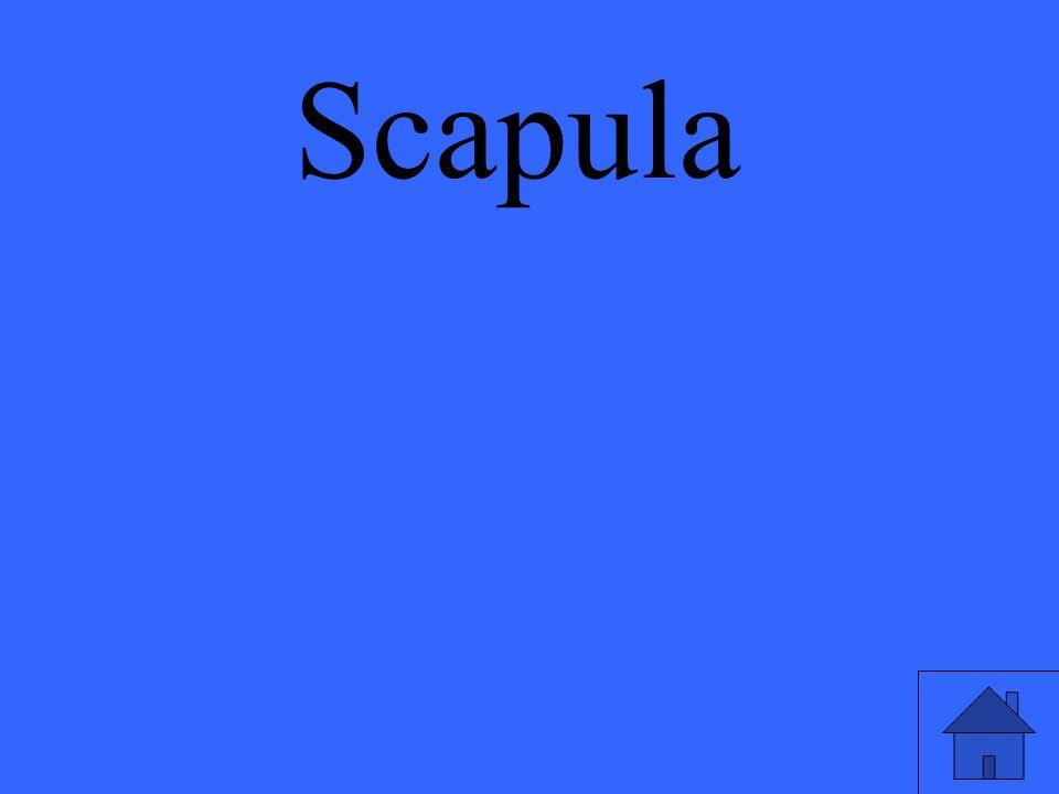 Scapula