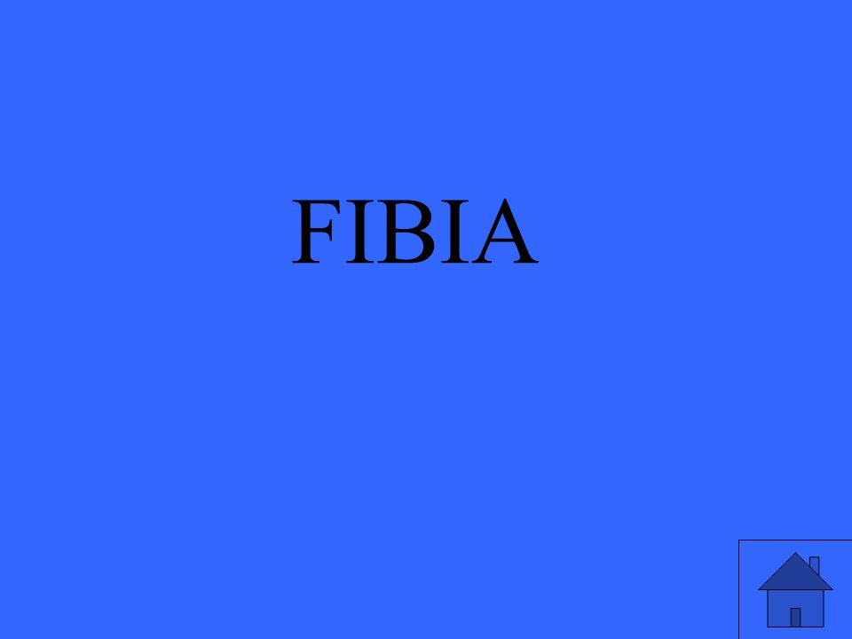 FIBIA
