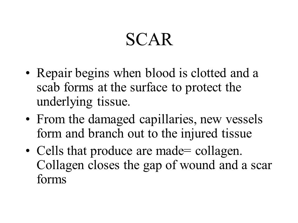 SCAR Repair begins when blood is clotted and a scab forms at the surface to protect the underlying tissue. From the damaged capillaries, new vessels f