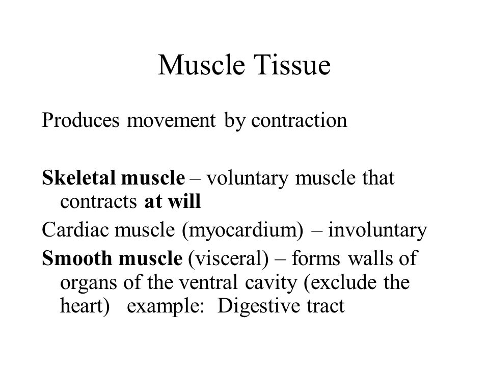 Muscle Tissue Produces movement by contraction Skeletal muscle – voluntary muscle that contracts at will Cardiac muscle (myocardium) – involuntary Smo