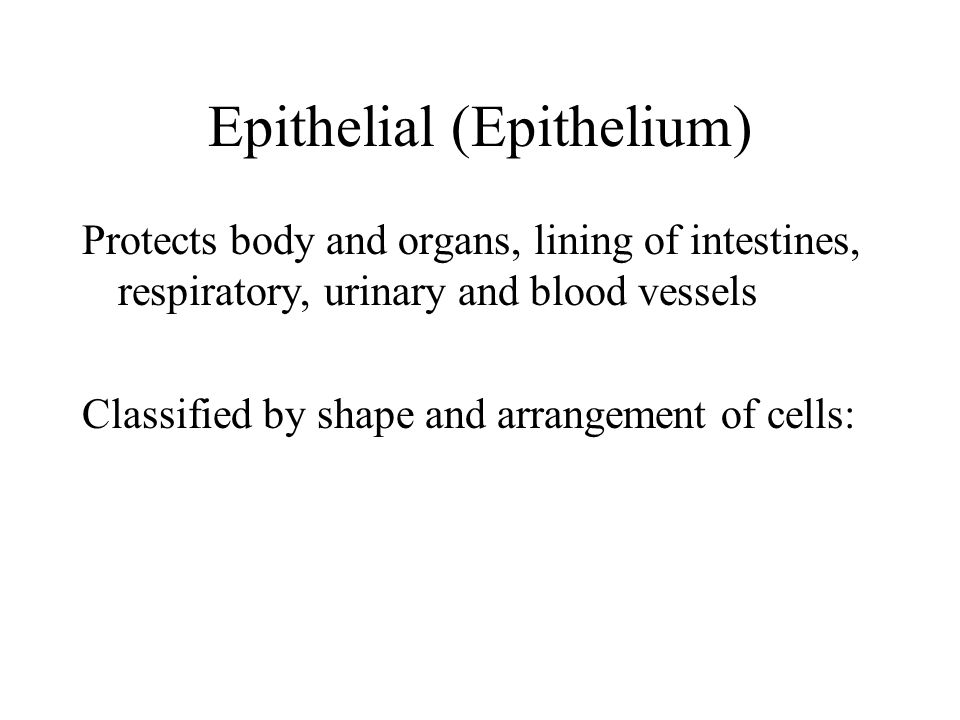 Epithelial (Epithelium) Protects body and organs, lining of intestines, respiratory, urinary and blood vessels Classified by shape and arrangement of