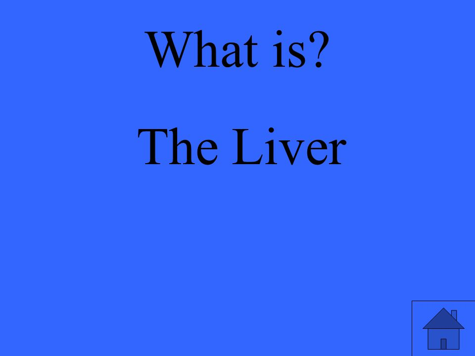 What is The Liver