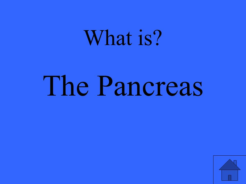 What is The Pancreas