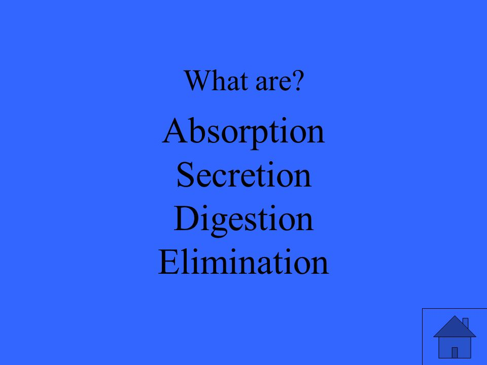 What are Absorption Secretion Digestion Elimination