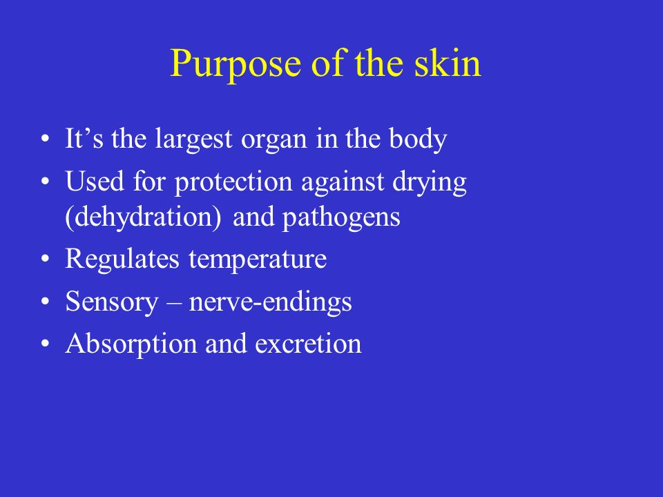 Purpose of the skin Its the largest organ in the body Used for protection against drying (dehydration) and pathogens Regulates temperature Sensory – n