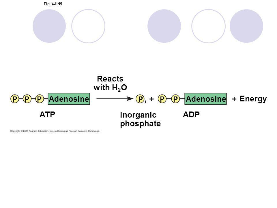 Fig. 4-UN5 PPPP i PP Adenosine ADPATP Inorganic phosphate Reacts with H 2 O Energy