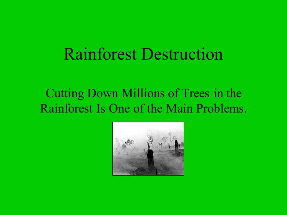 Climate Tropical rain forests are mainly the product of climatic interactions, particularly temperature and rainfall.