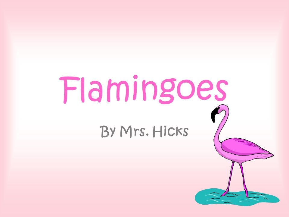 Flamingoes By Mrs. Hicks