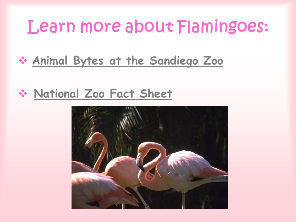 Learn more about Flamingoes: Animal Bytes at the Sandiego Zoo National Zoo Fact Sheet