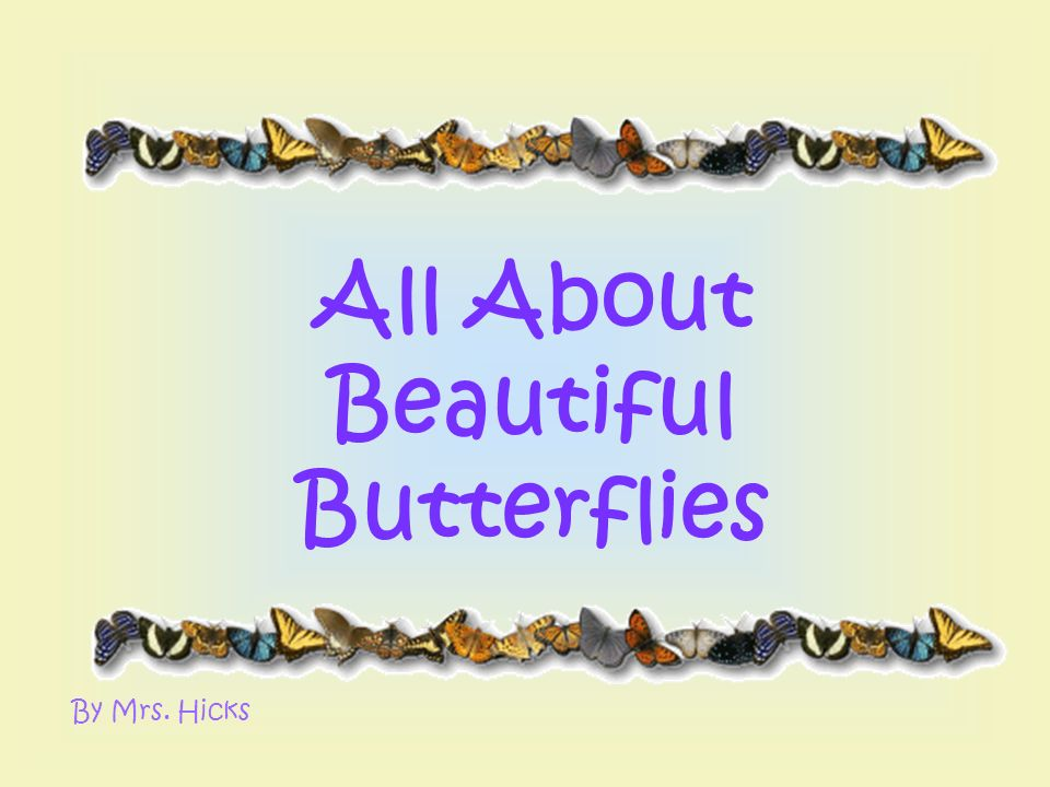 All About Beautiful Butterflies By Mrs. Hicks