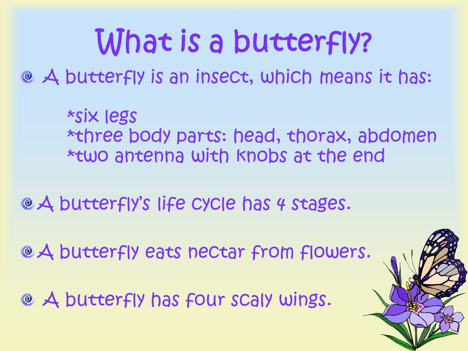 What is a butterfly? A butterfly is an insect, which means it has: *six legs *three body parts: head, thorax, abdomen *two antenna with knobs at the e