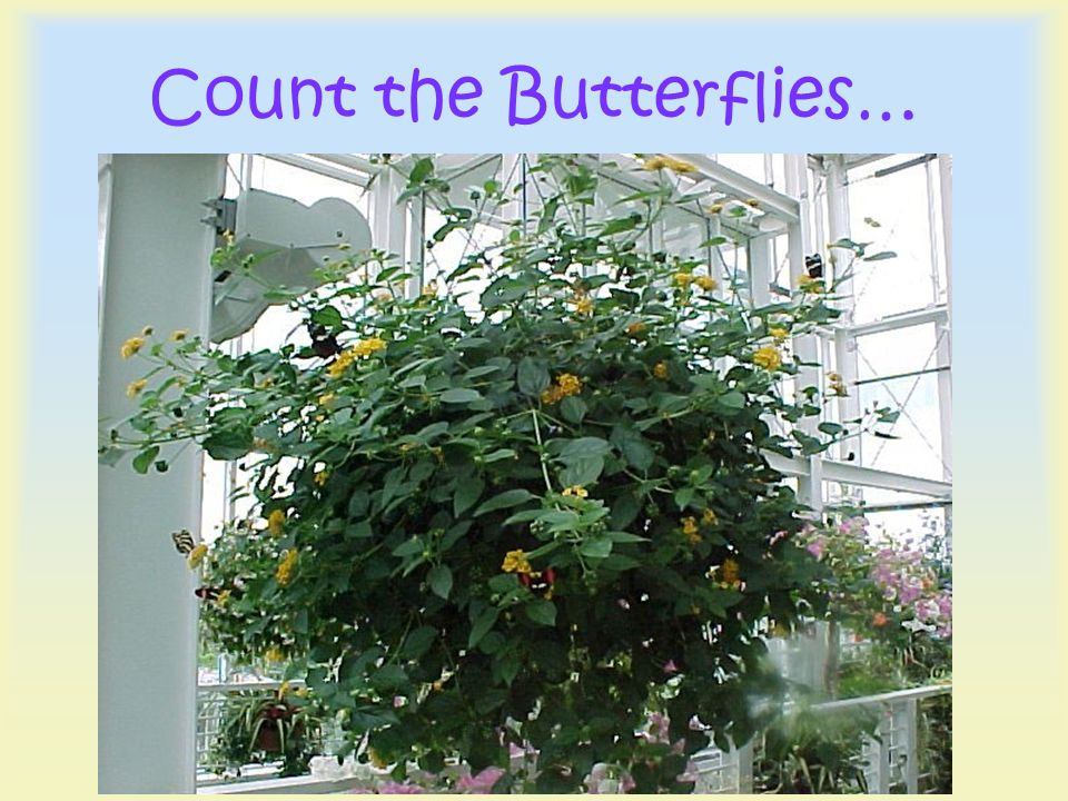 Count the Butterflies…