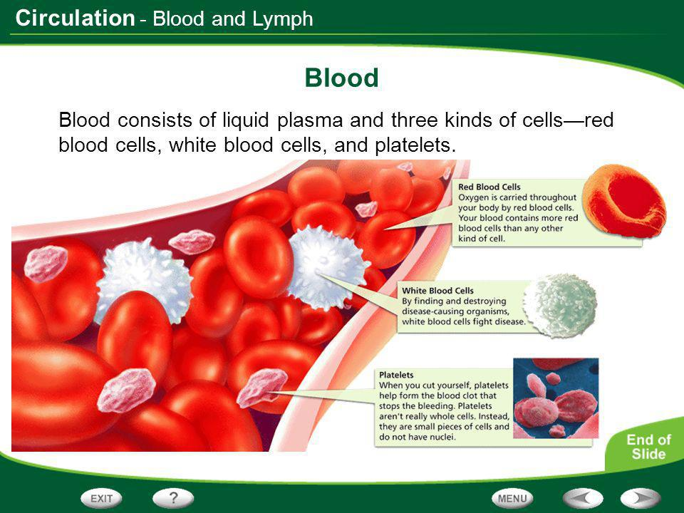 Circulation - Blood and Lymph Blood Types The marker molecules on your red blood cells determine your blood type and the type of blood that you can safely receive in transfusions.