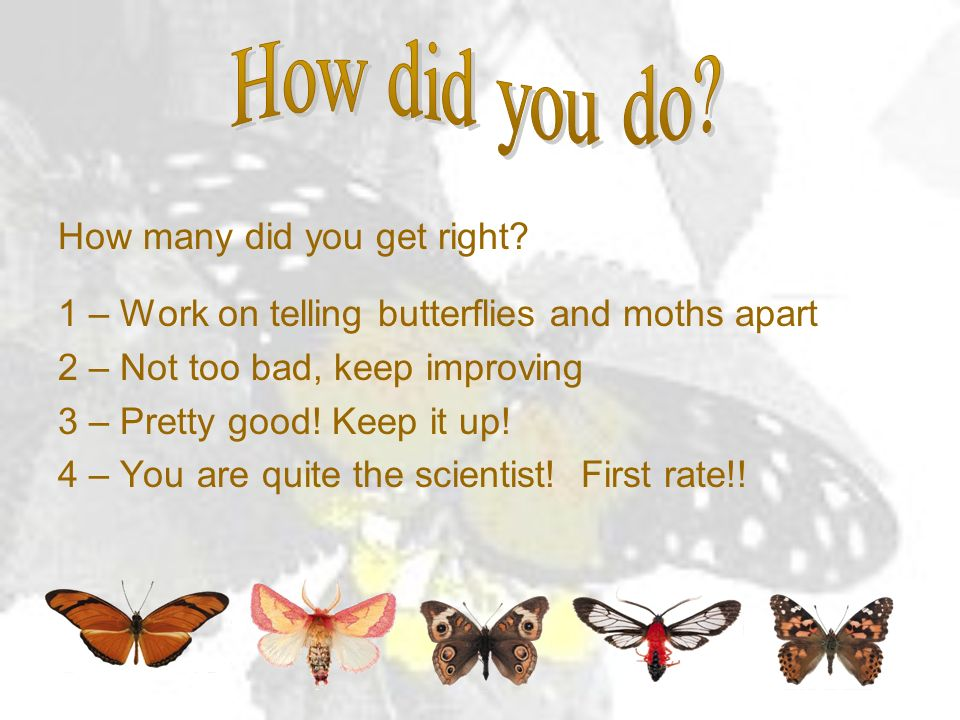 How many did you get right? 1 – Work on telling butterflies and moths apart 2 – Not too bad, keep improving 3 – Pretty good! Keep it up! 4 – You are q