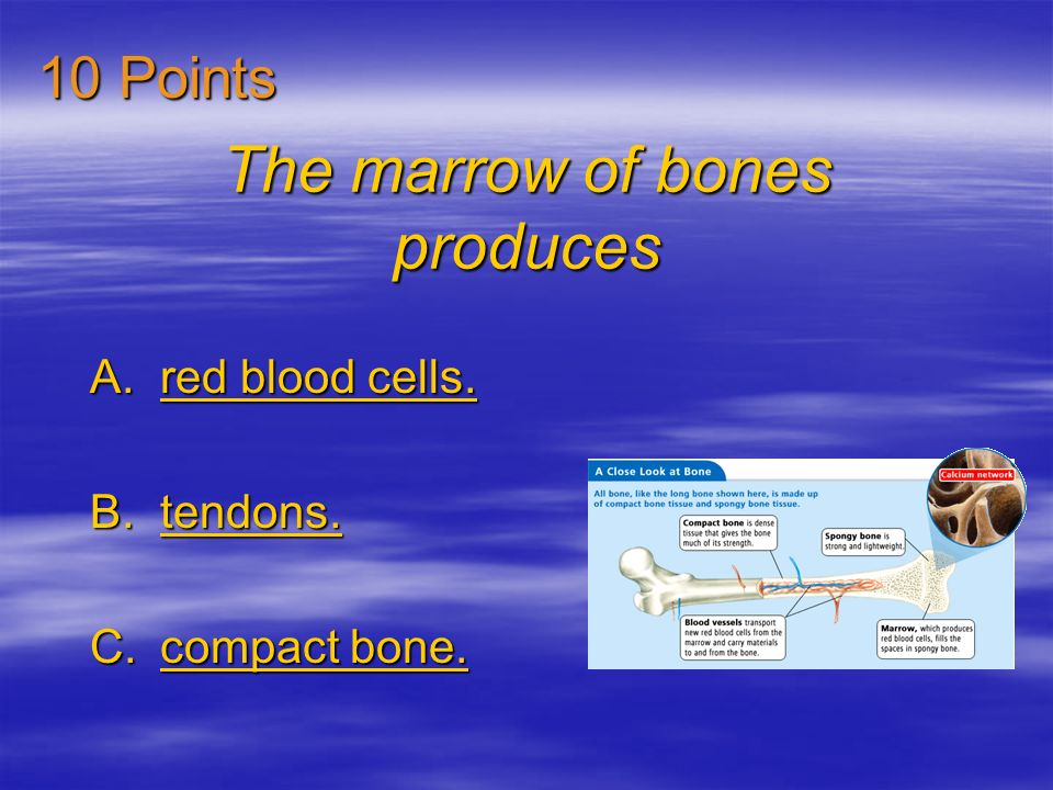 The marrow of bones produces A.red blood cells.red blood cells.red blood cells.