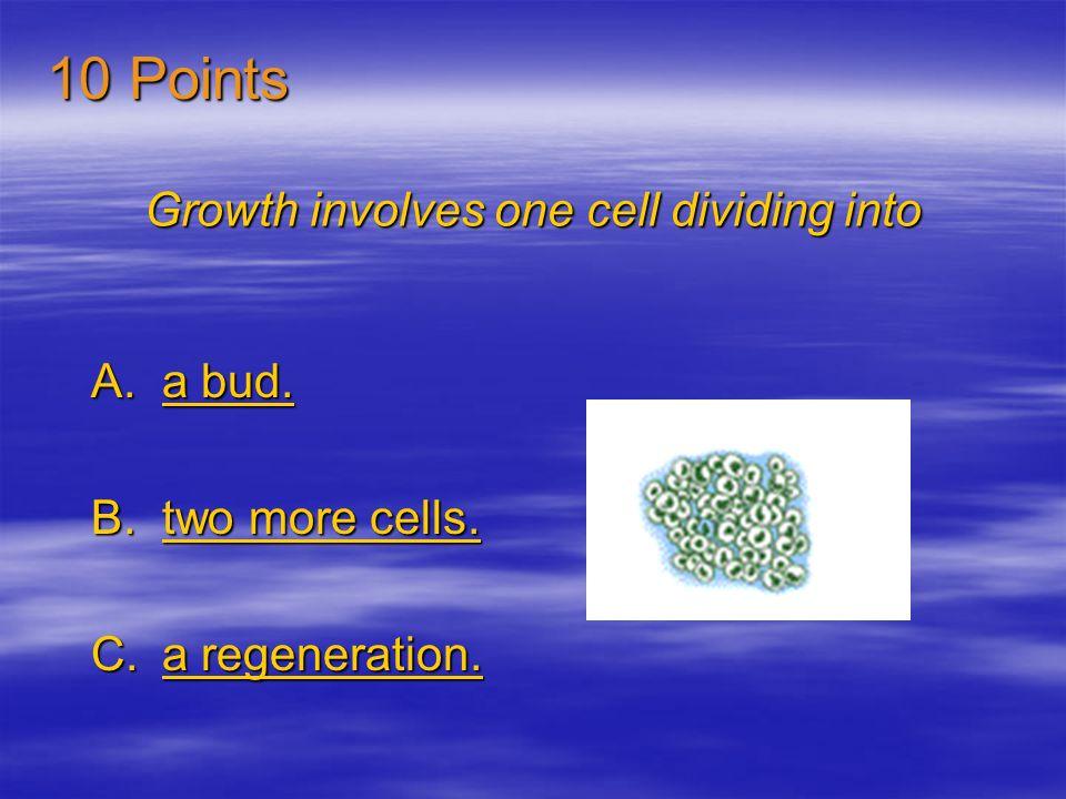 Growth involves one cell dividing into A.a bud.a bud.a bud.