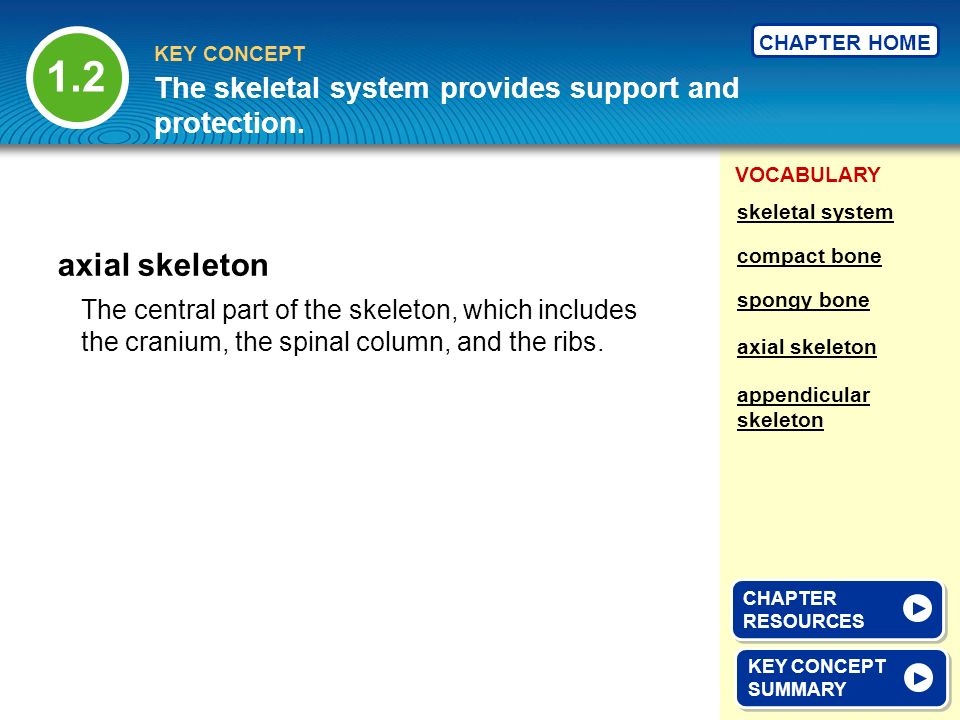 VOCABULARY KEY CONCEPT CHAPTER HOME The central part of the skeleton, which includes the cranium, the spinal column, and the ribs. axial skeleton KEY