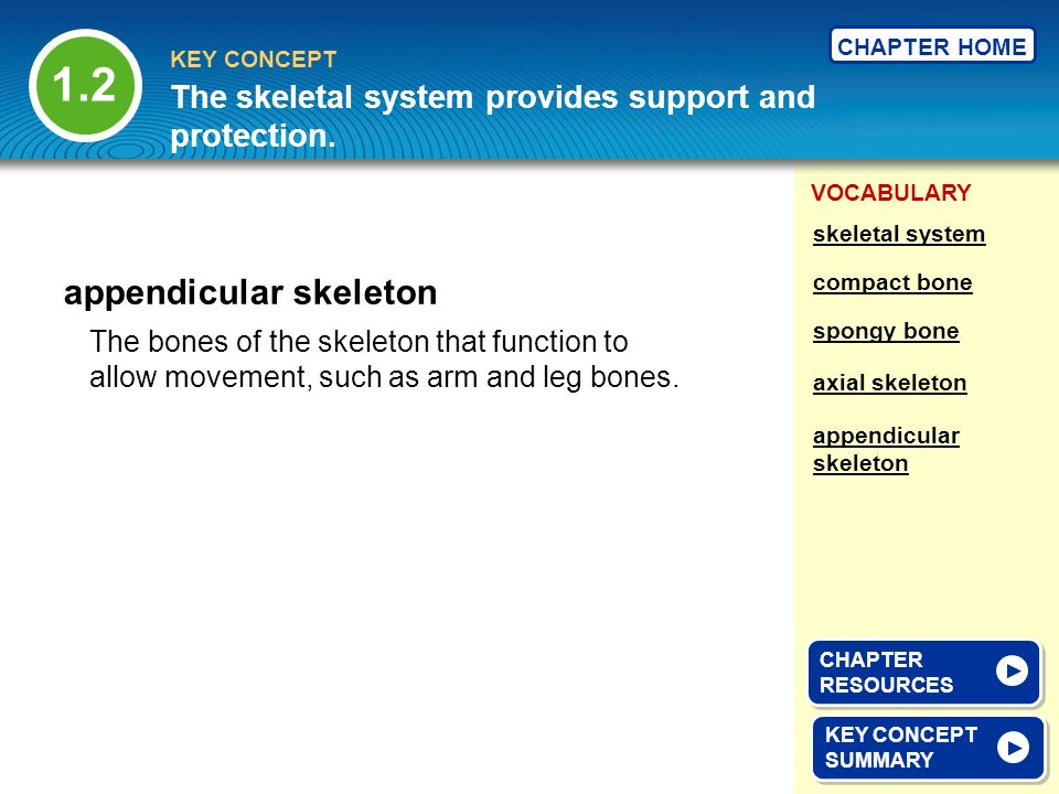VOCABULARY KEY CONCEPT CHAPTER HOME The bones of the skeleton that function to allow movement, such as arm and leg bones. appendicular skeleton KEY CO