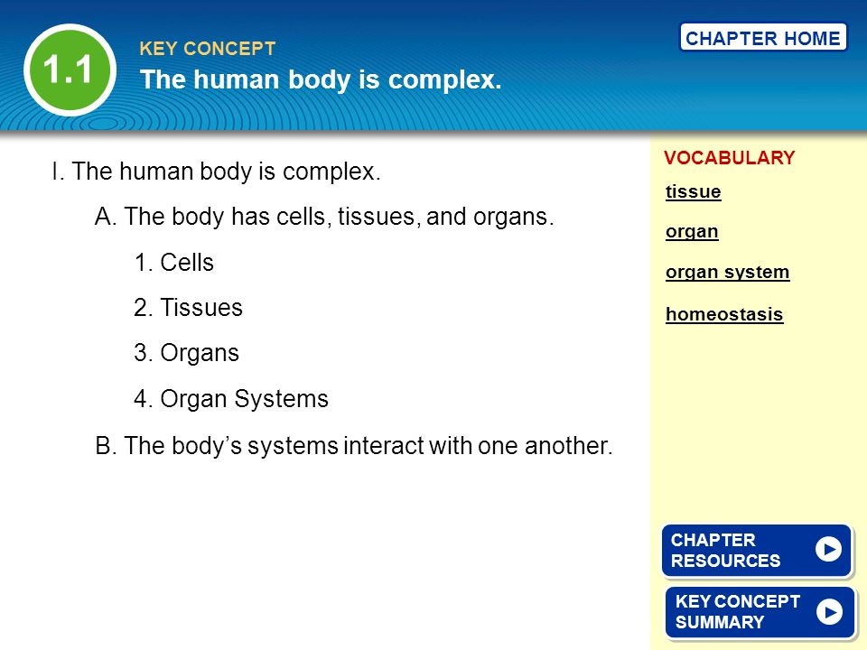 VOCABULARY KEY CONCEPT CHAPTER HOME I. The human body is complex. A. The body has cells, tissues, and organs. B. The bodys systems interact with one a