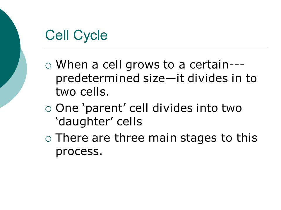 Cell Division The Cell Cycle: Interphase Mitosis Cytokinesis