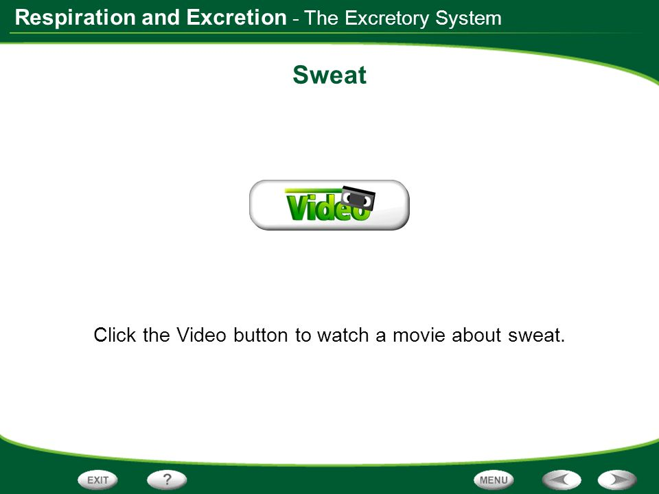 Respiration and Excretion Sweat Click the Video button to watch a movie about sweat. - The Excretory System