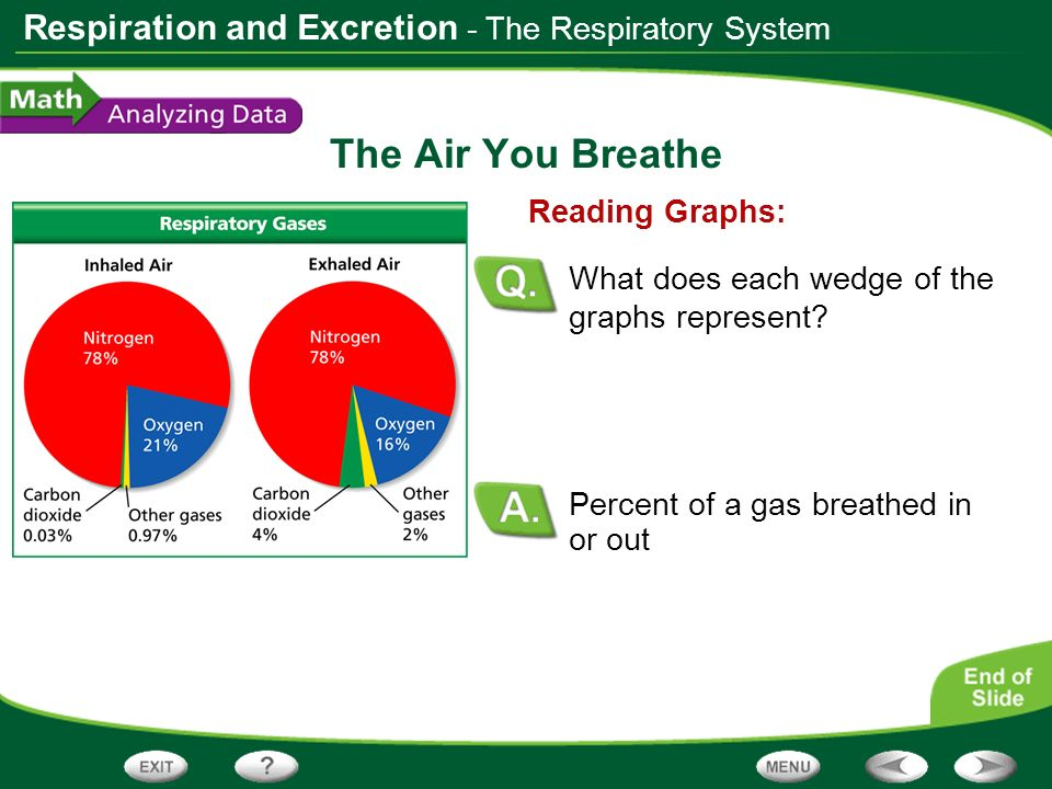 Respiration and Excretion The Air You Breathe Percent of a gas breathed in or out Reading Graphs: What does each wedge of the graphs represent? - The