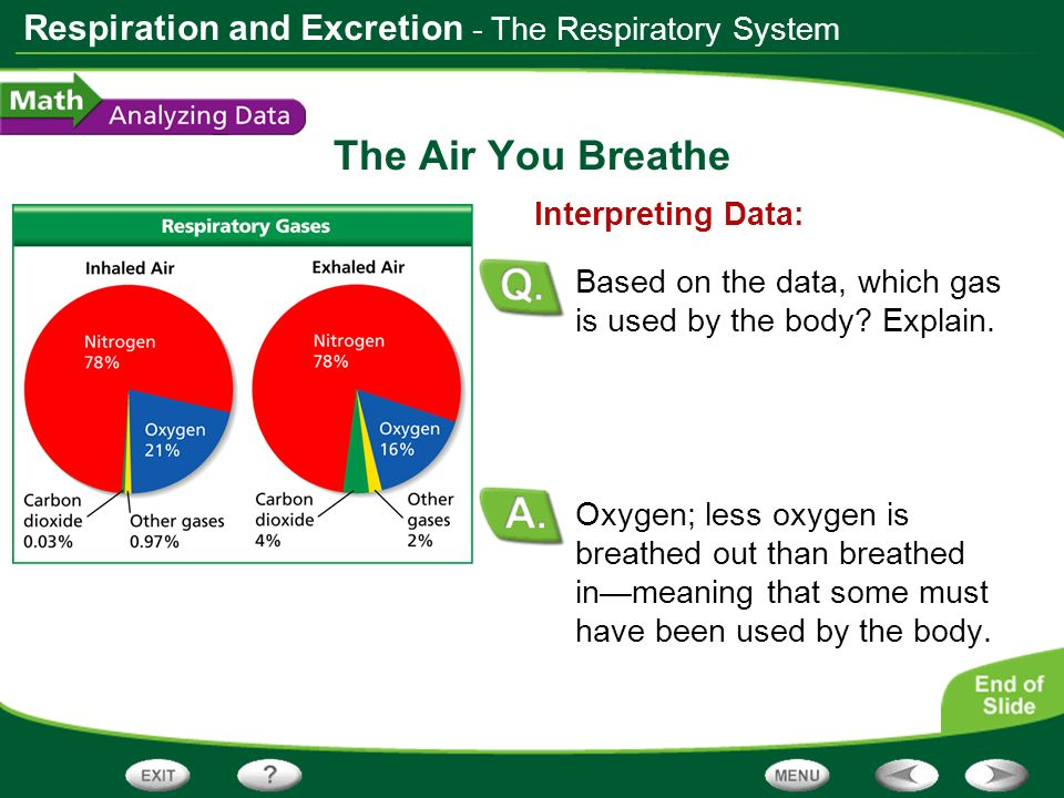 Respiration and Excretion The Air You Breathe Oxygen; less oxygen is breathed out than breathed inmeaning that some must have been used by the body. I