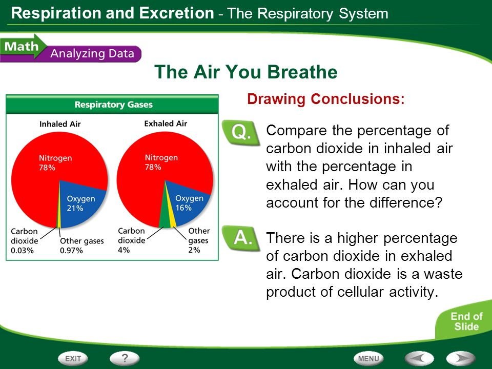 Respiration and Excretion The Air You Breathe Nitrogen is not used by the body and is not a waste product.