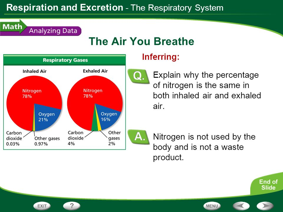 Respiration and Excretion The Air You Breathe Nitrogen is not used by the body and is not a waste product. Inferring: Explain why the percentage of ni