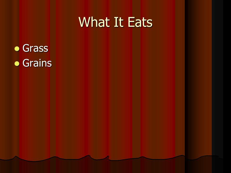 What It Eats Grass Grass Grains Grains