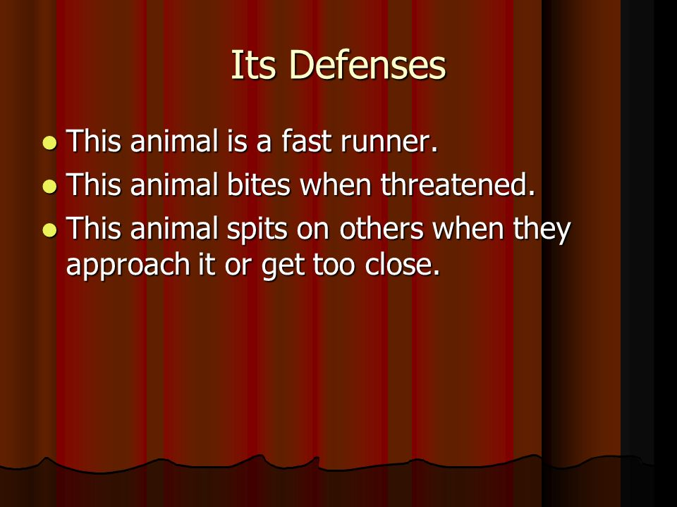 Its Defenses This animal is a fast runner. This animal is a fast runner.