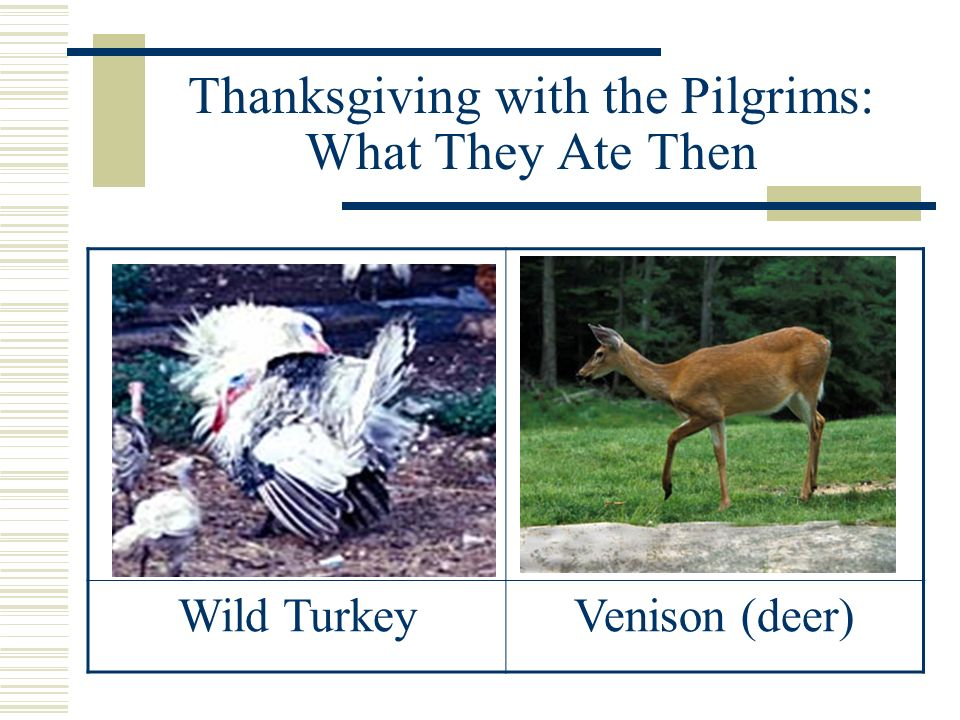 Thanksgiving with the Pilgrims: What They Ate Then Fresh FishLots of Eel
