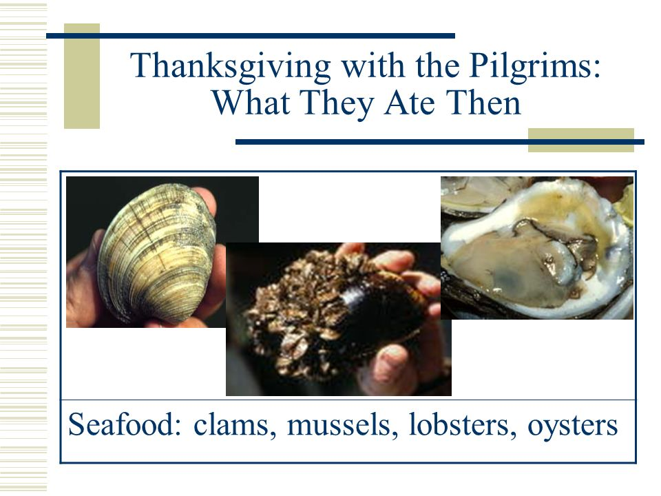 Thanksgiving with the Pilgrims: What They Ate Then Indian Corn: used to make Plimoth Cornbread and Succotash (corn and beans)