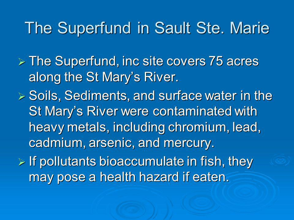 The Superfund in Sault Ste. Marie The Superfund, inc site covers 75 acres along the St Marys River.