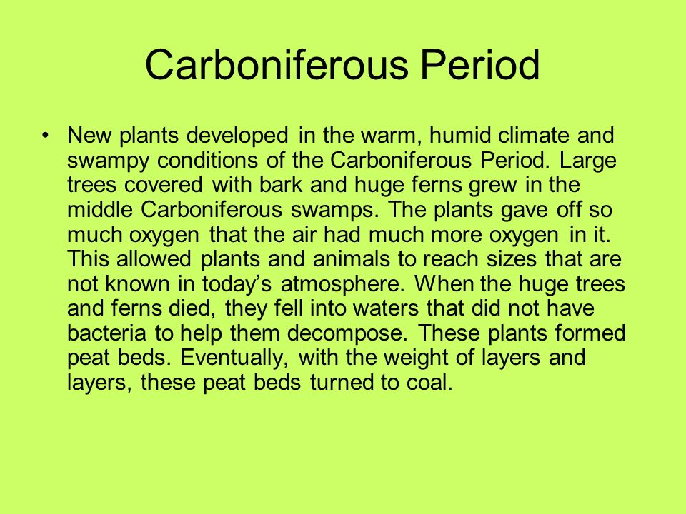 Carboniferous Period New plants developed in the warm, humid climate and swampy conditions of the Carboniferous Period. Large trees covered with bark