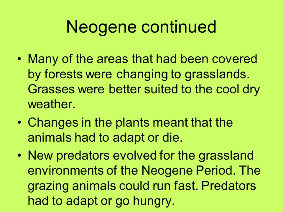 Neogene continued Many of the areas that had been covered by forests were changing to grasslands. Grasses were better suited to the cool dry weather.