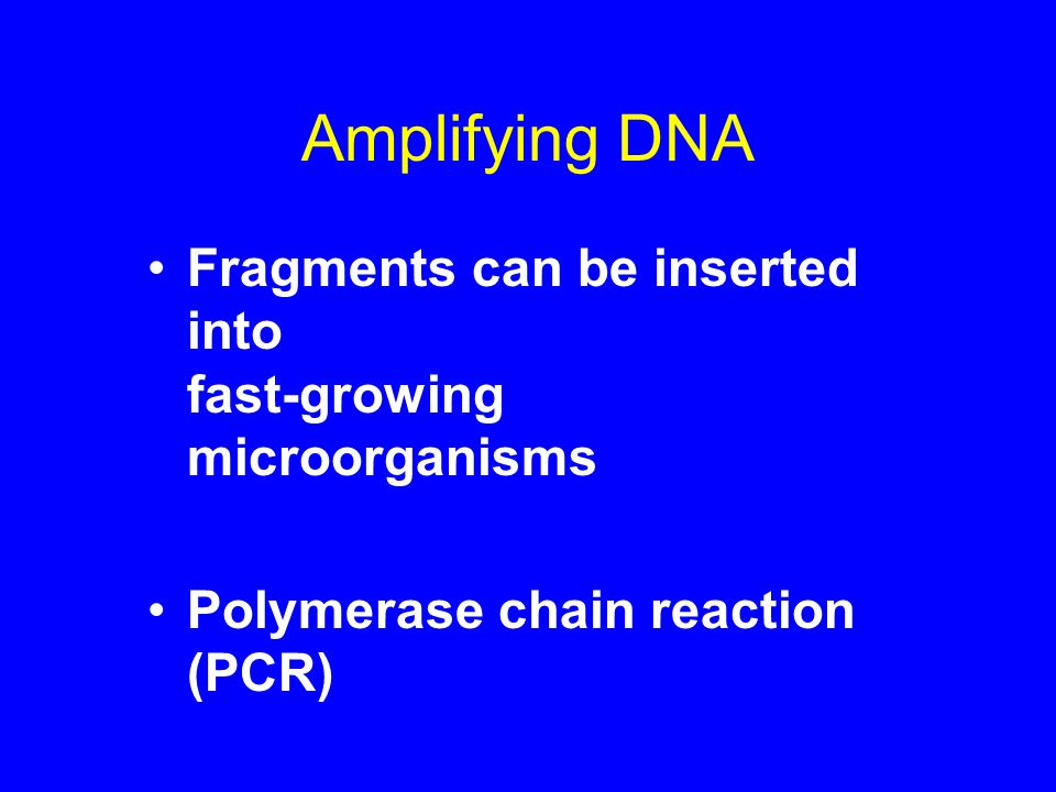 Amplifying DNA Fragments can be inserted into fast-growing microorganisms Polymerase chain reaction (PCR)