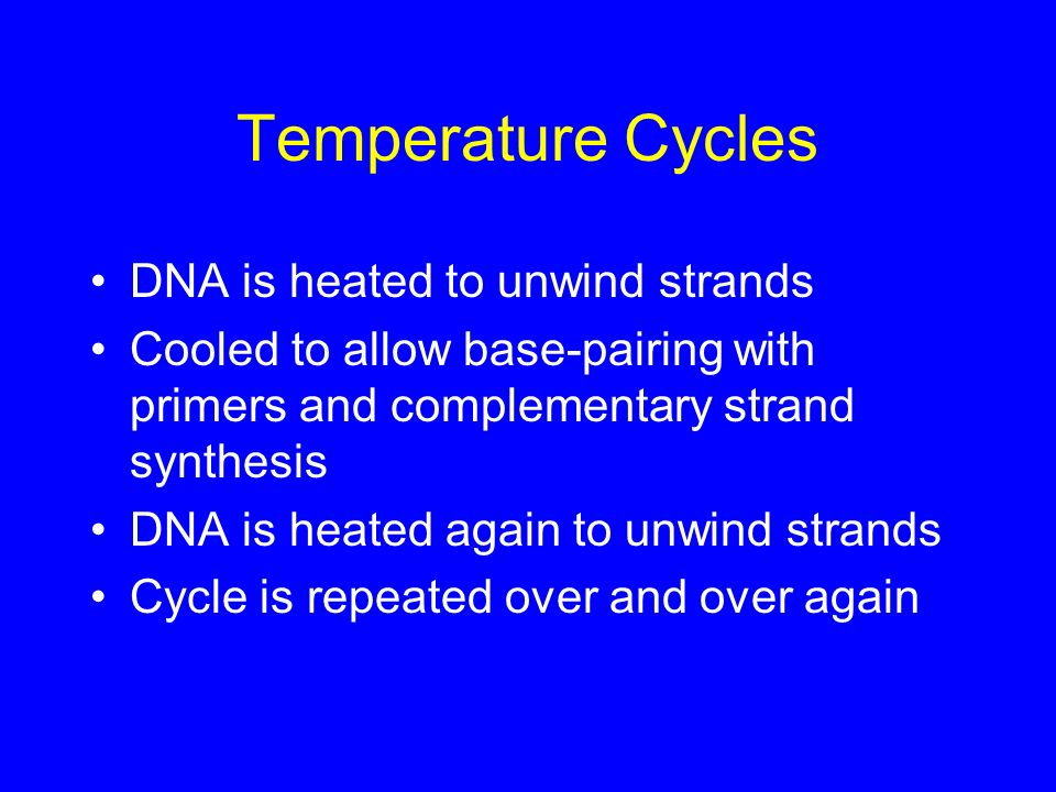 Temperature Cycles DNA is heated to unwind strands Cooled to allow base-pairing with primers and complementary strand synthesis DNA is heated again to