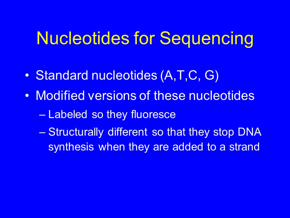 Nucleotides for Sequencing Standard nucleotides (A,T,C, G) Modified versions of these nucleotides –Labeled so they fluoresce –Structurally different s