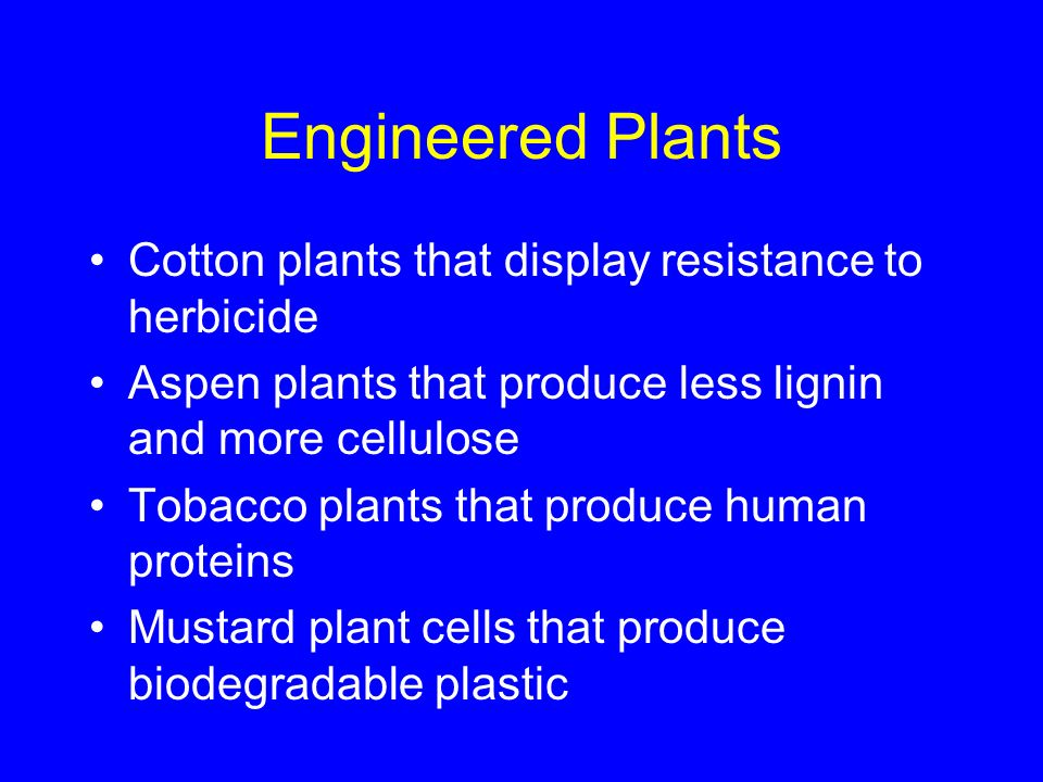 Engineered Plants Cotton plants that display resistance to herbicide Aspen plants that produce less lignin and more cellulose Tobacco plants that prod