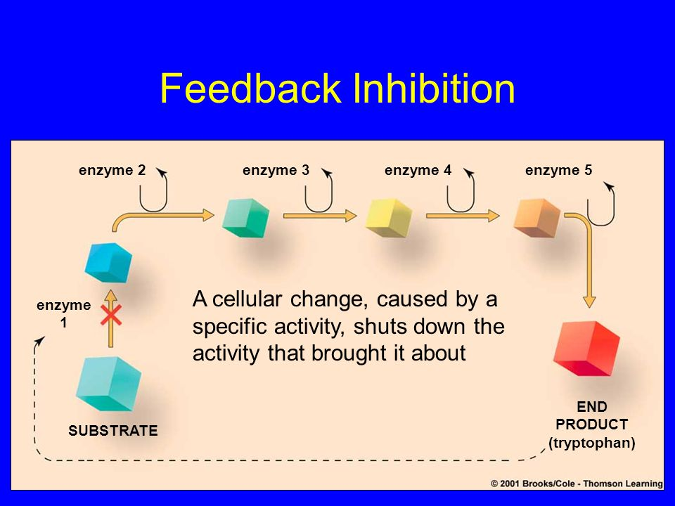 Feedback Inhibition enzyme 2enzyme 3enzyme 4enzyme 5 enzyme 1 SUBSTRATE END PRODUCT (tryptophan) A cellular change, caused by a specific activity, shu