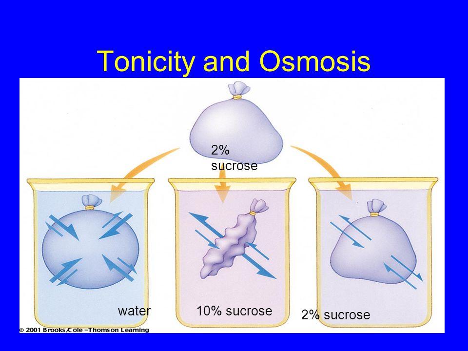 Tonicity and Osmosis 2% sucrose water10% sucrose 2% sucrose