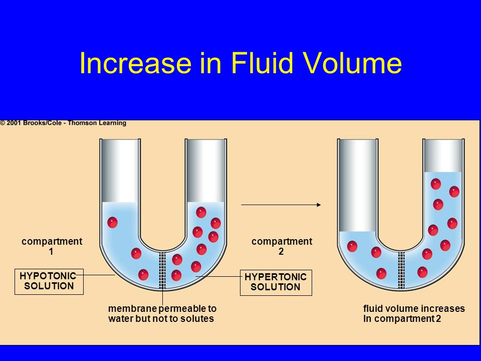 Increase in Fluid Volume compartment 1 HYPOTONIC SOLUTION membrane permeable to water but not to solutes HYPERTONIC SOLUTION compartment 2 fluid volum