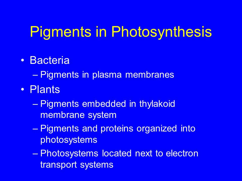 Pigments in Photosynthesis Bacteria –Pigments in plasma membranes Plants –Pigments embedded in thylakoid membrane system –Pigments and proteins organi