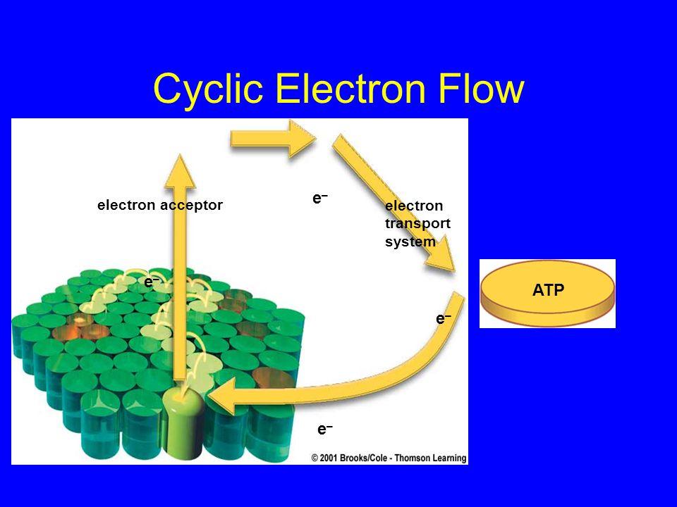 Cyclic Electron Flow electron acceptor electron transport system e–e– e–e– e–e– e–e– ATP