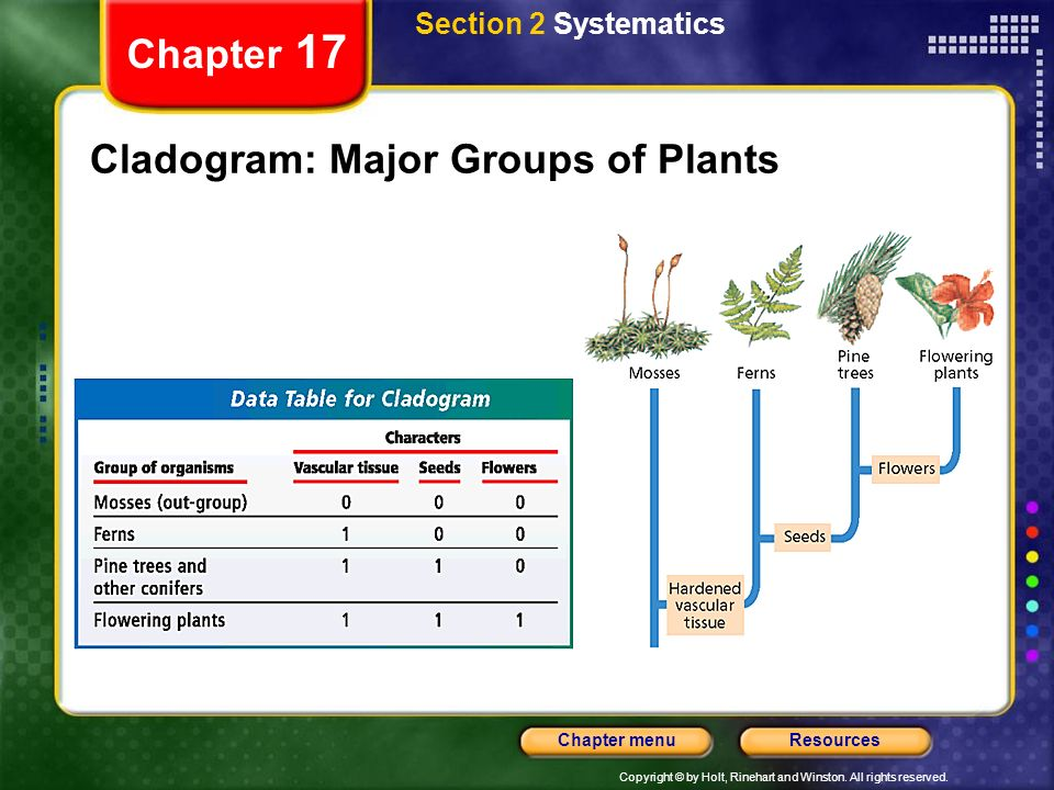 Copyright © by Holt, Rinehart and Winston. All rights reserved. ResourcesChapter menu Chapter 17 Cladogram: Major Groups of Plants Section 2 Systemati