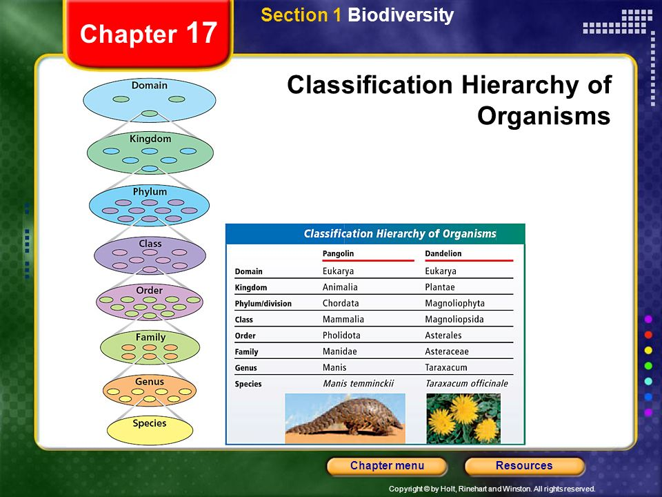 Copyright © by Holt, Rinehart and Winston. All rights reserved. ResourcesChapter menu Chapter 17 Classification Hierarchy of Organisms Section 1 Biodi