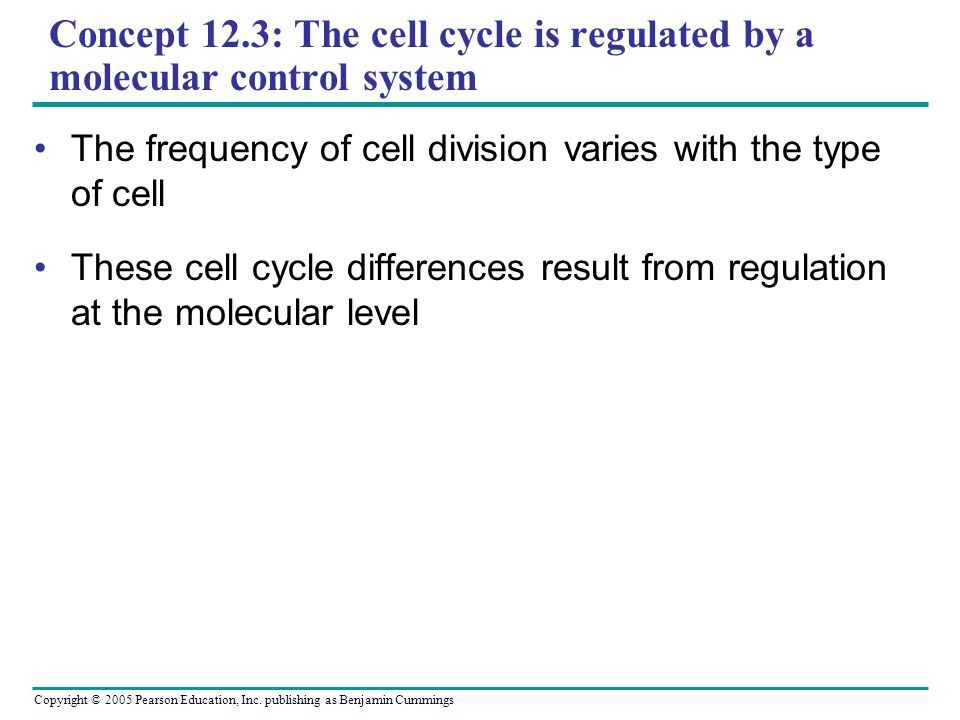 Copyright © 2005 Pearson Education, Inc. publishing as Benjamin Cummings Concept 12.3: The cell cycle is regulated by a molecular control system The f
