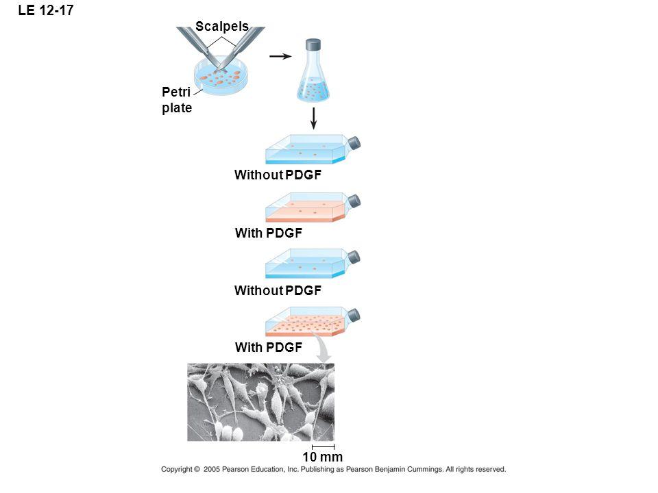 LE 12-17 Petri plate Scalpels Without PDGF With PDGF Without PDGF With PDGF 10 mm